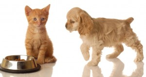protecting your pet from flea allergies